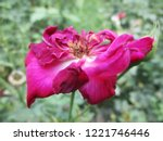 colorful flowers  beautiful... | Shutterstock . vector #1221746446