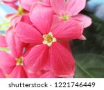 colorful flowers  beautiful... | Shutterstock . vector #1221746449