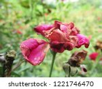 colorful flowers  beautiful... | Shutterstock . vector #1221746470
