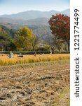 beautiful autumn rice field and ... | Shutterstock . vector #1221774499