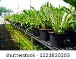 flower nursery ornamental... | Shutterstock . vector #1221830203
