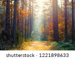 sunny autumn forest. the warm... | Shutterstock . vector #1221898633