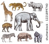 Set Of African Animals....