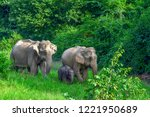 a family of wildlife elephants... | Shutterstock . vector #1221950689