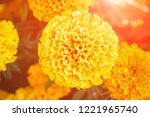 orange flower marigold on... | Shutterstock . vector #1221965740