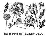 botanical graphic illustration... | Shutterstock . vector #1222040620