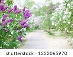 spring bright horizontal... | Shutterstock . vector #1222065970