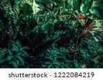 tropical leaves in the garden ...   Shutterstock . vector #1222084219