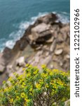 small yellow flowers on the... | Shutterstock . vector #1222102966