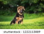 german shepherd puppy | Shutterstock . vector #1222113889