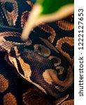 snake tangled python while... | Shutterstock . vector #1222127653