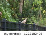 mourning dove bird perched on... | Shutterstock . vector #1222182403