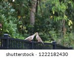 mourning dove bird perched on... | Shutterstock . vector #1222182430