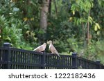 mourning dove bird perched on... | Shutterstock . vector #1222182436