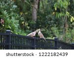 mourning dove bird perched on... | Shutterstock . vector #1222182439