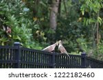 mourning dove bird perched on... | Shutterstock . vector #1222182460