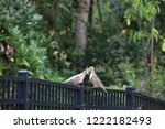 mourning dove bird perched on... | Shutterstock . vector #1222182493