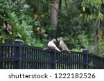 mourning dove bird perched on... | Shutterstock . vector #1222182526