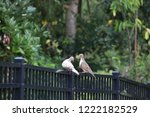 mourning dove bird perched on... | Shutterstock . vector #1222182529