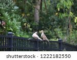 mourning dove bird perched on... | Shutterstock . vector #1222182550