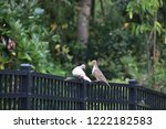 mourning dove bird perched on... | Shutterstock . vector #1222182583