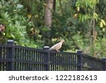 mourning dove bird perched on... | Shutterstock . vector #1222182613