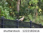 mourning dove bird perched on... | Shutterstock . vector #1222182616