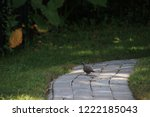 mourning dove bird perched on... | Shutterstock . vector #1222185043