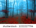 calm foggy forest during autumn ... | Shutterstock . vector #1222227706