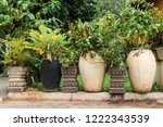 vases with tropical pants and... | Shutterstock . vector #1222343539