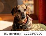 close up portrait of miniature... | Shutterstock . vector #1222347100