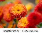 delicate little blooming autumn ... | Shutterstock . vector #1222358353