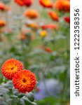 orange little blooming autumn... | Shutterstock . vector #1222358356