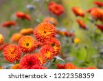 bright orange autumn... | Shutterstock . vector #1222358359