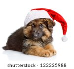 Cute Puppy Dog In Red Christma...