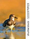 Cute Water Bird. Common Bird...