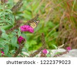monarch butterfly on a violet... | Shutterstock . vector #1222379023