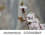blossoming apricot flowers on... | Shutterstock . vector #1222463869