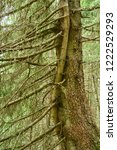 two entwined tree trunks of... | Shutterstock . vector #1222529293