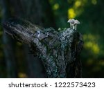 a group of tiny white mushrooms ... | Shutterstock . vector #1222573423