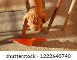 puppy of hungarian vyzhla... | Shutterstock . vector #1222640740
