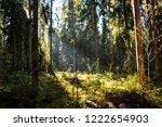 forest sunlight background....   Shutterstock . vector #1222654903