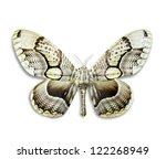 Stock photo butterfly species brahmidia hearseyi solated on white background 122268949