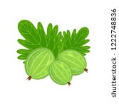 green gooseberry  vector... | Shutterstock .eps vector #1222748836