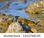 common kingfisher standing on... | Shutterstock . vector #1222768150