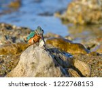 common kingfisher standing on... | Shutterstock . vector #1222768153