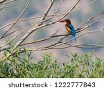 white throated kingfisher... | Shutterstock . vector #1222777843