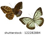 butterfly on white | Shutterstock . vector #122282884