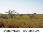Open Savanna Grassland And Som...