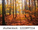 autumn in the forest  trees in... | Shutterstock . vector #1222897216
